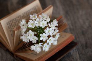 ספר ופרחים לבנים