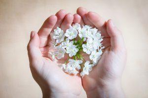 ידיים מחזיקות פרחים לבנים